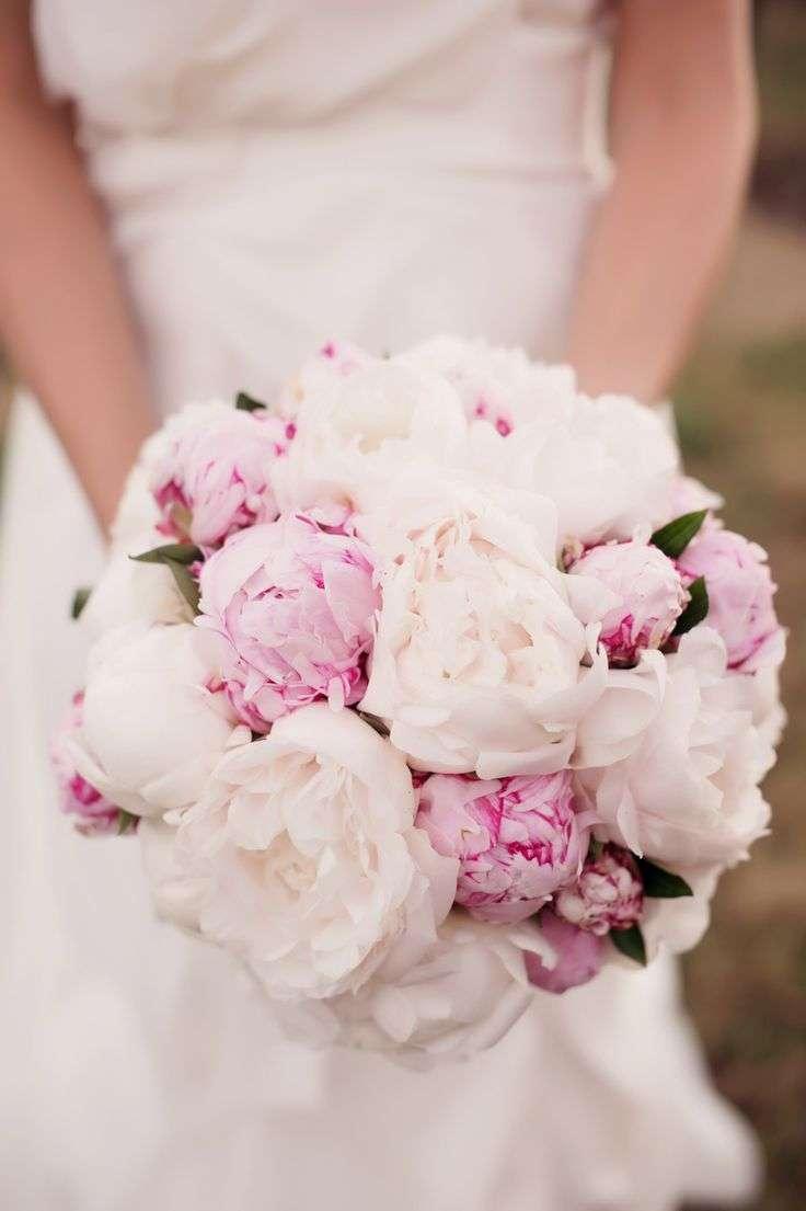 Le peonie, il mio fiore preferito..grazie Carlo..