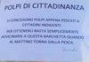 Amalfi. Polpo di cittadinanza