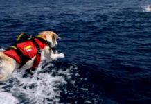 Cane bagnino salvataggio mare
