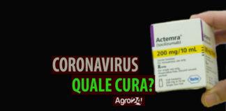 Coronavirus tocilizumab