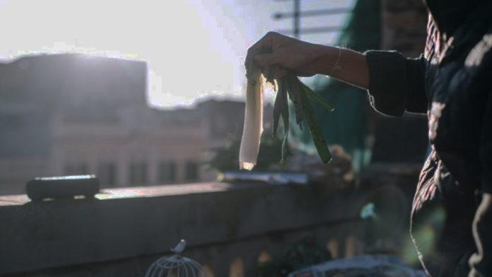 Grigliate sul balcone - Foto dal web