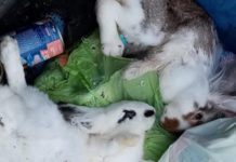 Coniglietti gettati tra i rifiuti