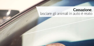 ANIMALI ABBANDONO AUTO