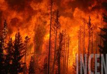 Incendi boschivi 21